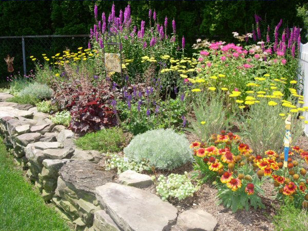 Landscape plant gallery a guide to landscape design for Landscape design guide