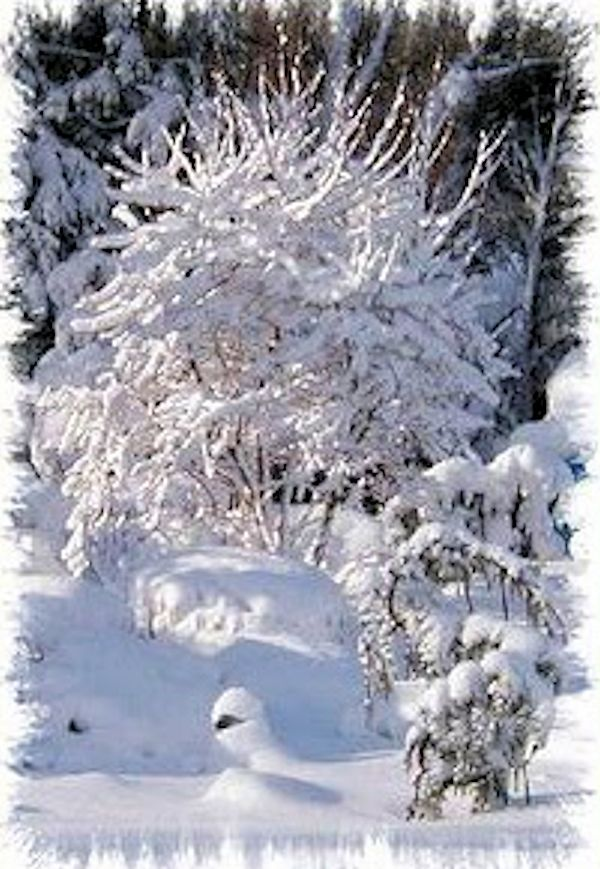 Winter care of trees shrubs perennials a guide to for Winter garden maintenance