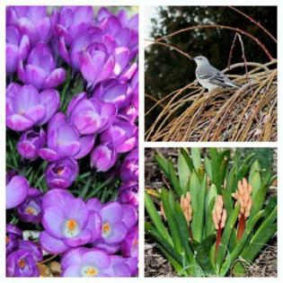 march-2012-garden