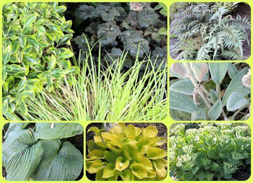 Foliage Combinations