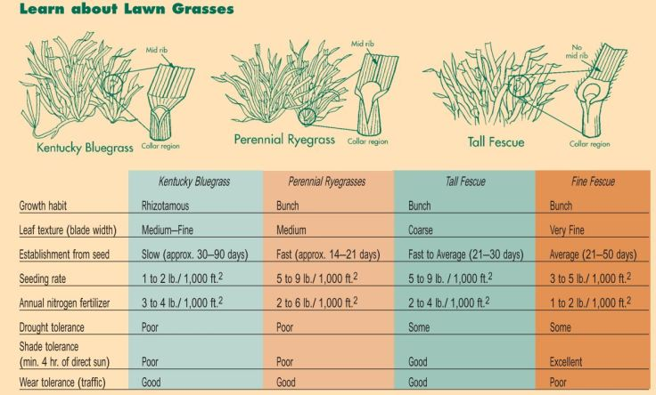 Lawn Care -Types of Seed httpccesuffolk.orgassetsHorticulture-LeafletsThe-Homeowners-Lawn-Care-and-Water-Quality-Almanac.pdf