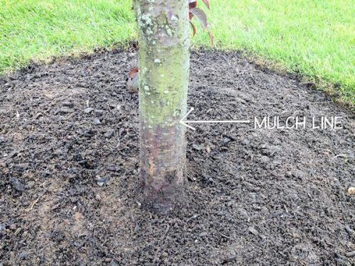 mulch line