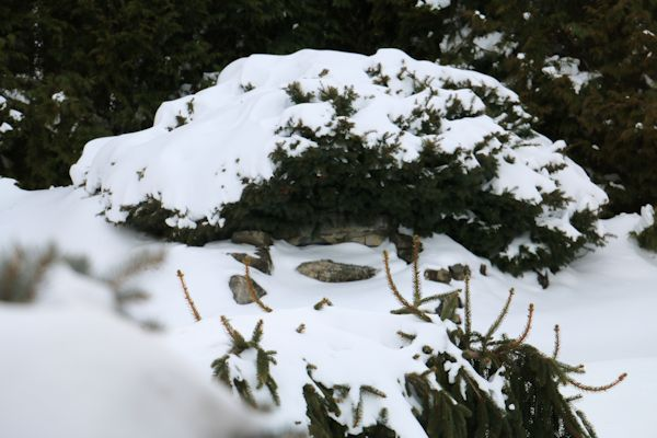 Blizzard Juno  Jan 27