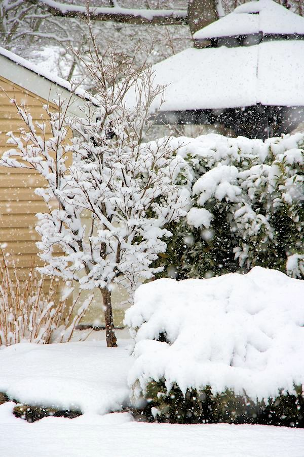 A guide to landscape design maintenance landscape for Winter garden maintenance