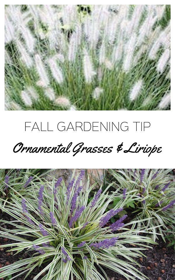 Ornamental Grasses A Guide To Landscape Design Maintenance